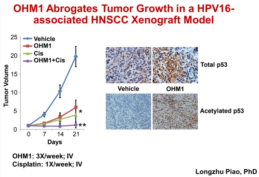 OHM1 Abrogates Tumor Growth in a HPV16-associated HNSCC Xenograft Model